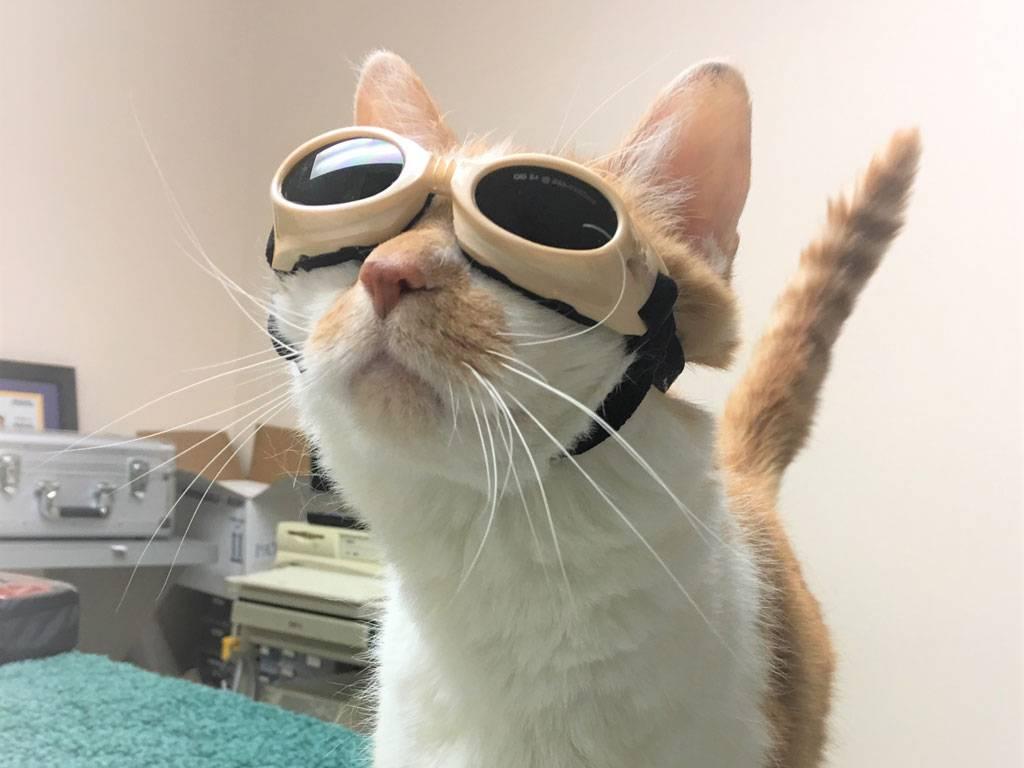 Cat ready for diagnostics session